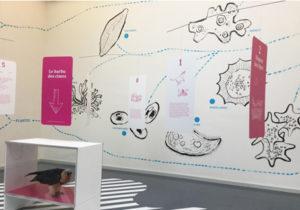 Musée de zoologie Lausanne exposition temporaire entrée libre